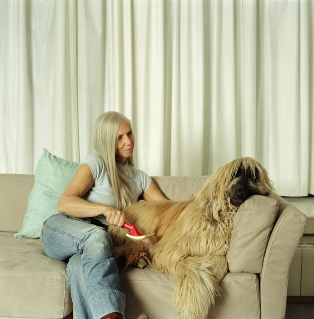 Mature woman on sofa grooming afghan hound
