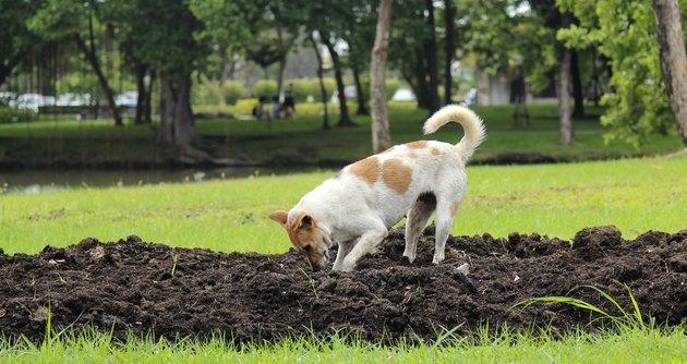 Purebred dog in a garden