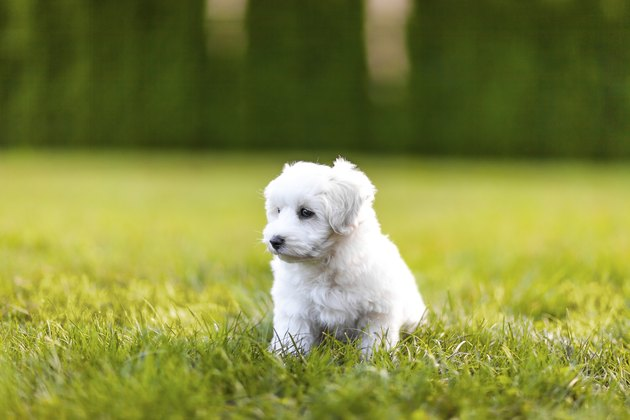 Puppy in a gras