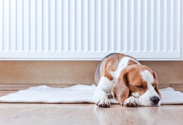 dog has a rest  near to  warm radiator