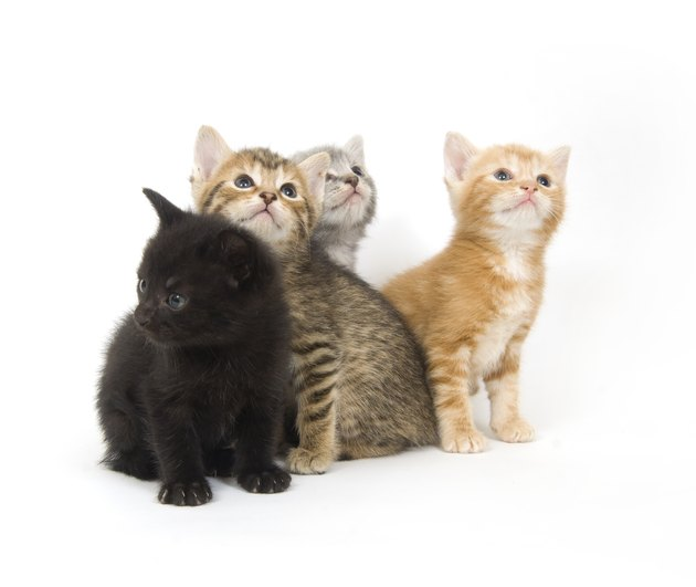 Four kittens on a white background