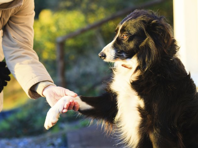 Dog paw and human hand doing a handshake outdoor