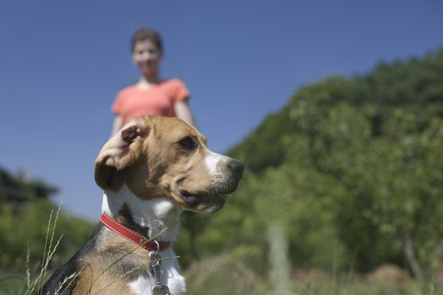 Dog and woman in field