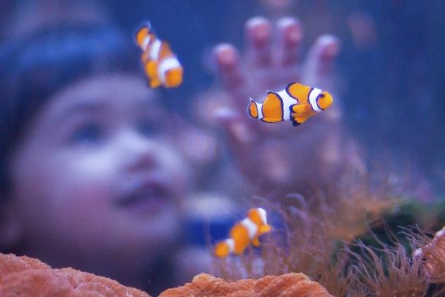 Girl and clown fish at an aquarium