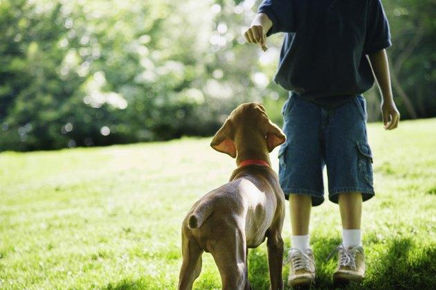 Boy holding treat for waiting dog