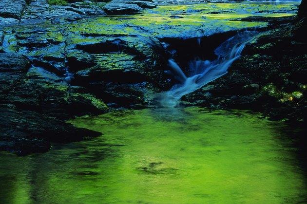 River flowing over algae covered rocks