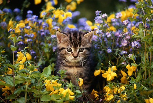Cat sitting in flower garden, close-up