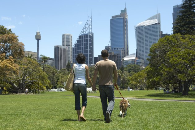 Young couple walking border collie in park holding hands, rear view