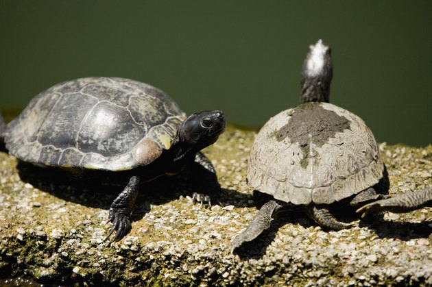 High angle view of turtles on a ledge, San Francisco, California, USA