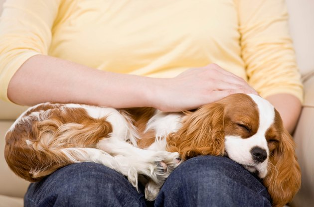 young woman with puppy sleeping on lap