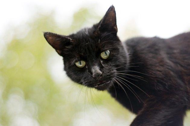 Sad Black cat