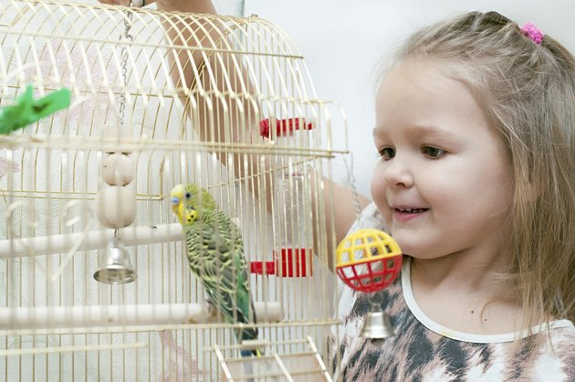budgerigar in birdcage and little girl