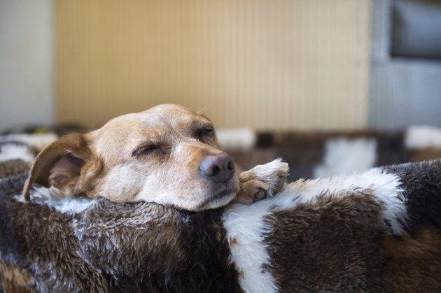 Sleepy cross breed dog in basket