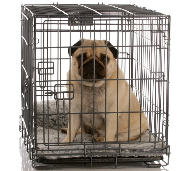 dog in a wire crate
