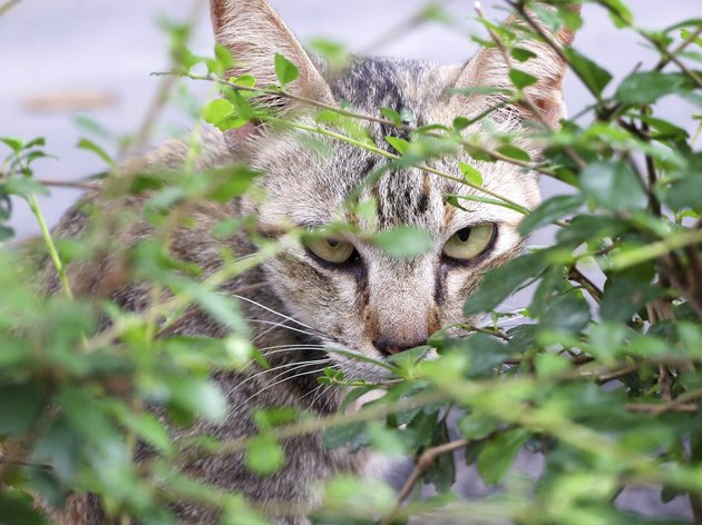Cat is looking from behind a tree