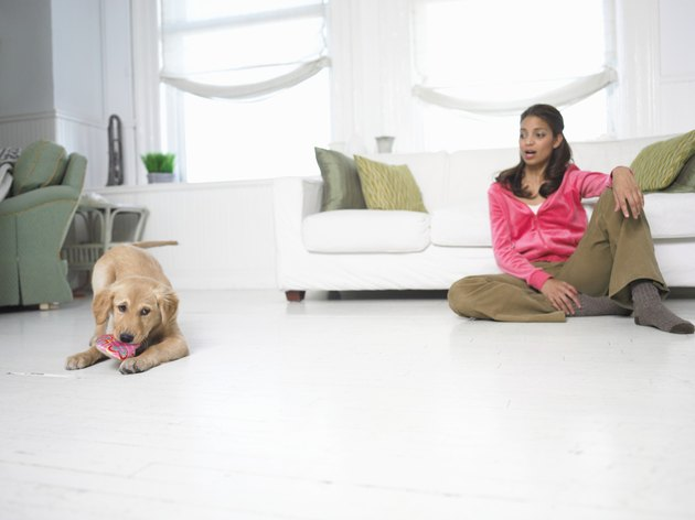 Dog Chewing on a Shoe, Woman Sitting on the Floor Looking at Him in Shock