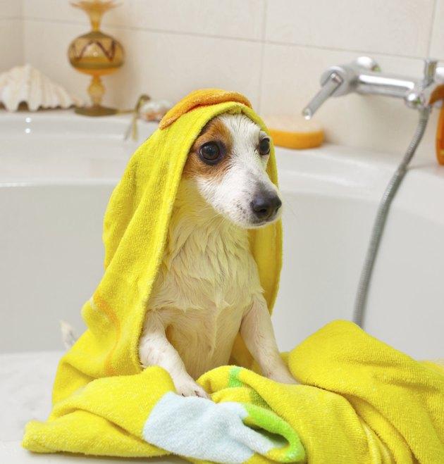 Dog taking a bath in bathtub