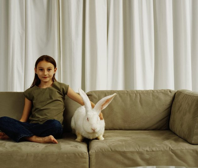 Girl (7-9) on sofa with white rabbit, portrait