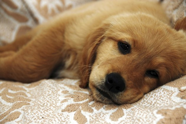 Little sad dog