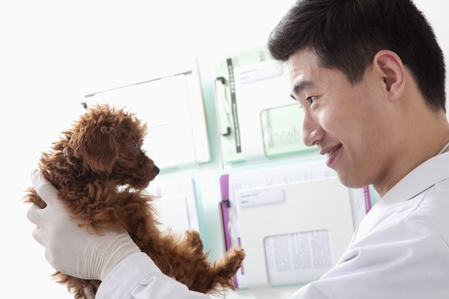 Veterinarian holding dog in office