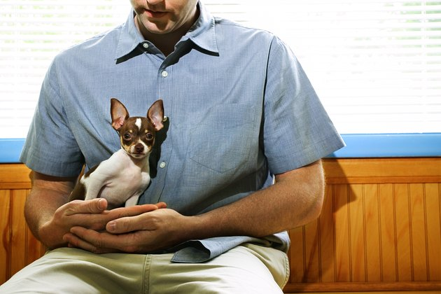 Man cradling chihuahua in vet clinic waiting room
