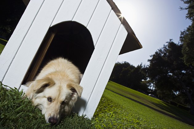 Dog lying down in doghouse