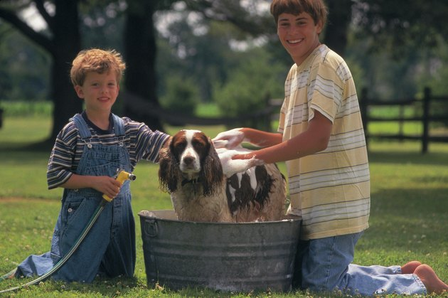 Boys washing dog in a tub