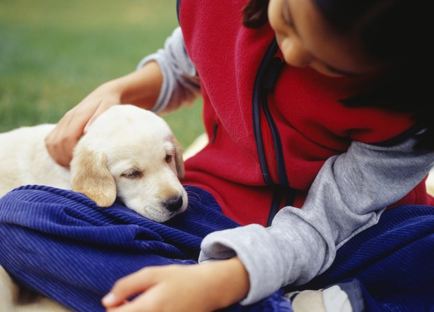 Girl (12-13) with Yellow Labrador puppy, close-up