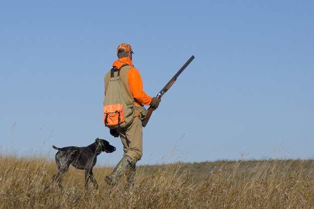 Out Pheasant Hunting