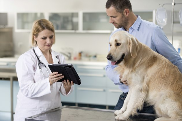 Vet With Dog And Owner