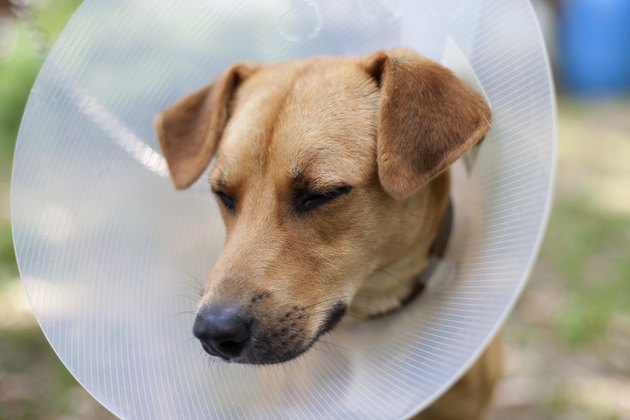 sad dog in cone