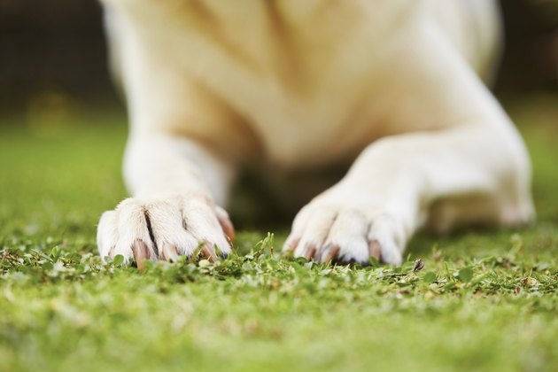Paws of dog