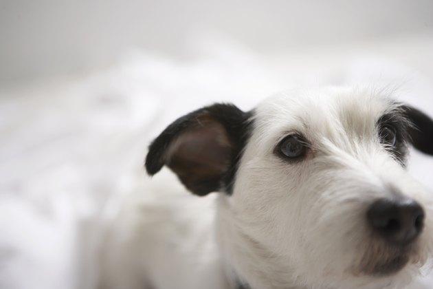Dog, close-up