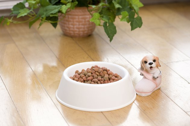Dog food in bowl next to toy dog