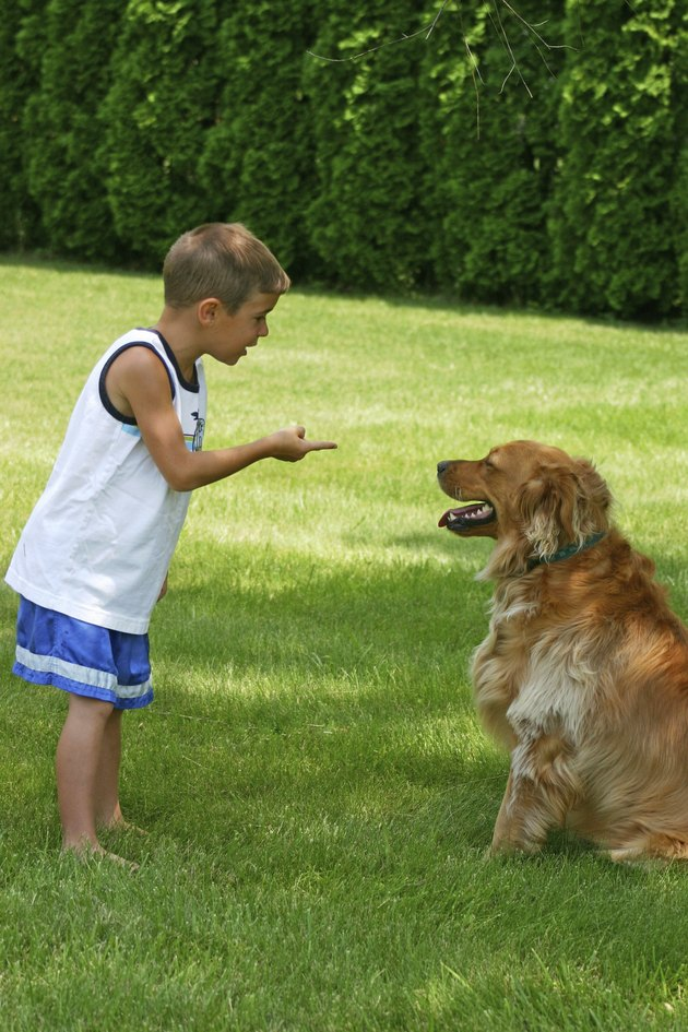 Boy Instructing Dog