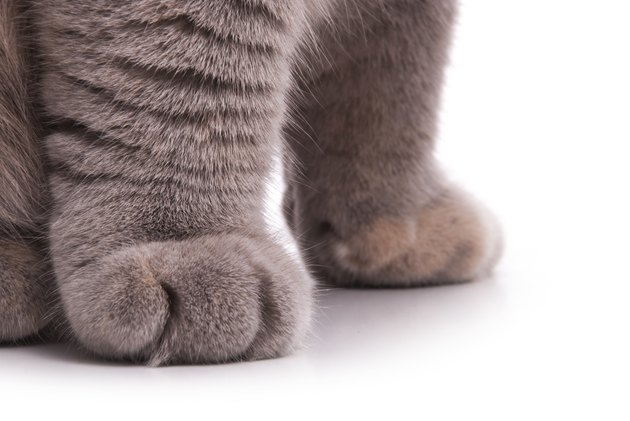 Cat's feet. Gray color.