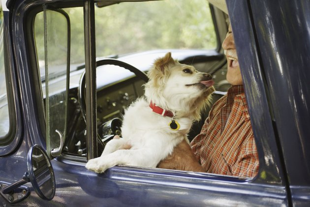Dog licking elderly man sitting in old pickup truck