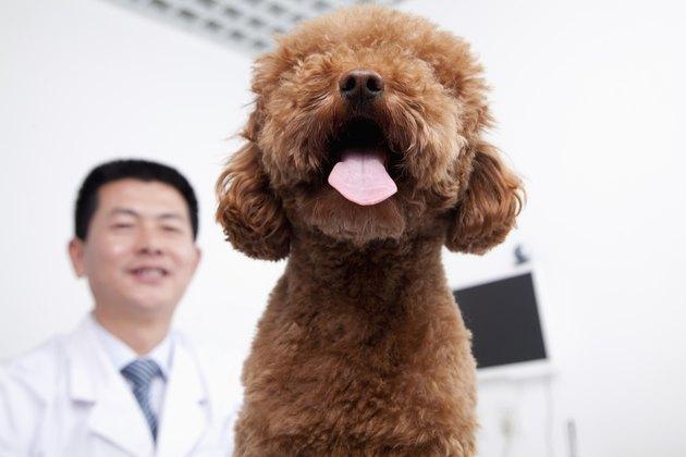Dog in veterinarian's office