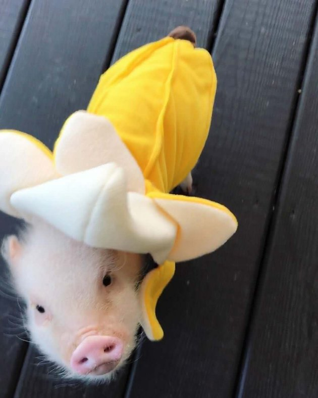 Piglet in a banana costume.