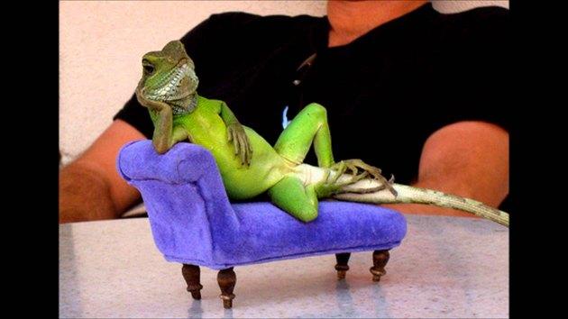 lizard sitting