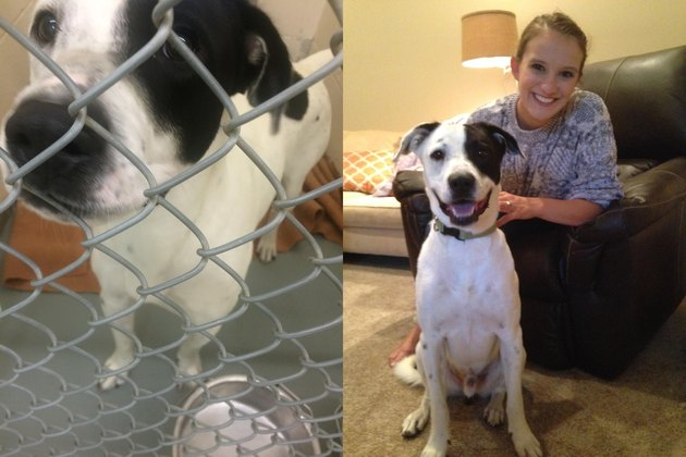 Dog behind chain link vs. dog looking happy.