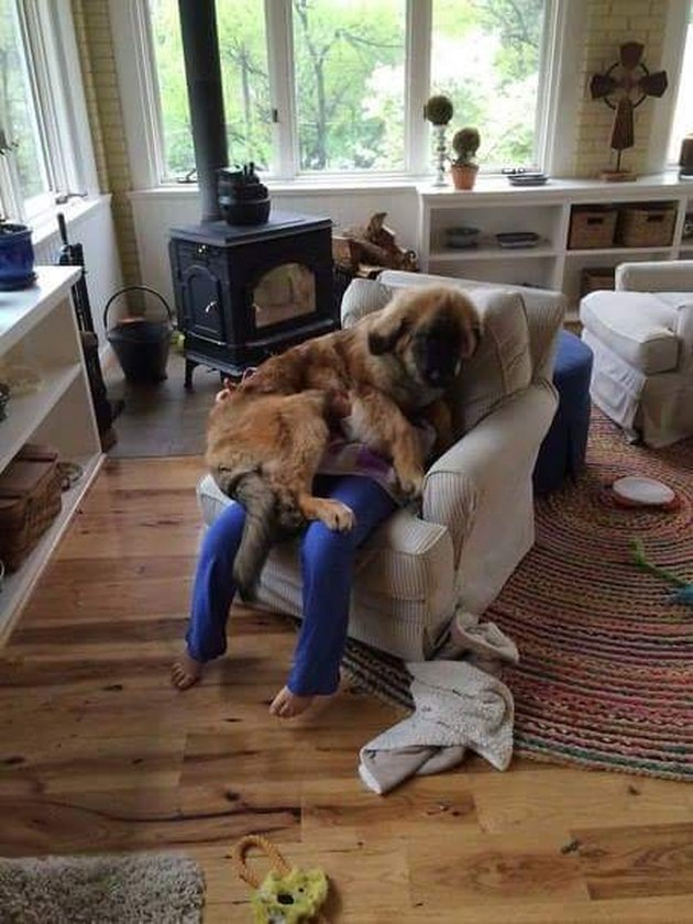 dog on top of person