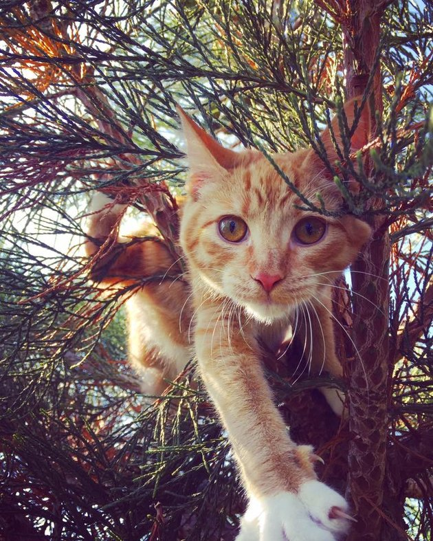 Orange cat in a tree