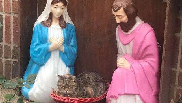 Chubby cat loafs in New York City nativity scene