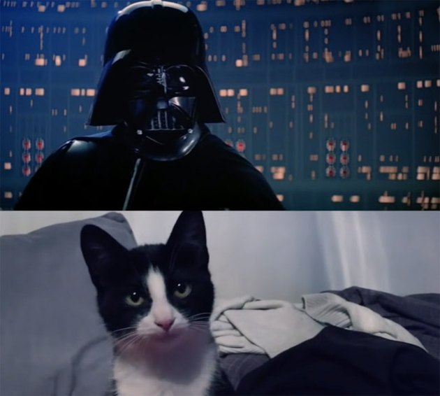 """""""Star Wars"""" But With Cats In Epic """"Empire Scratches Back"""" Remake"""