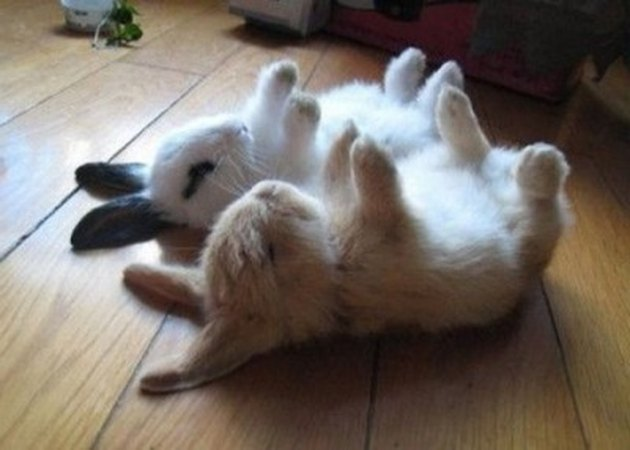 Bunnies asleep on their backs