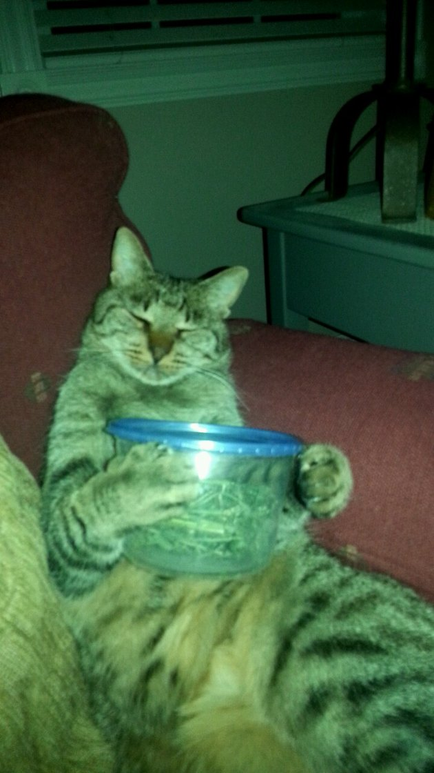 Cat holding a container of cat nip
