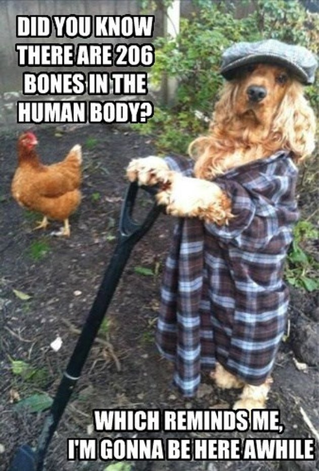 Dog wearing flannel shirt and hat holds a shovel.