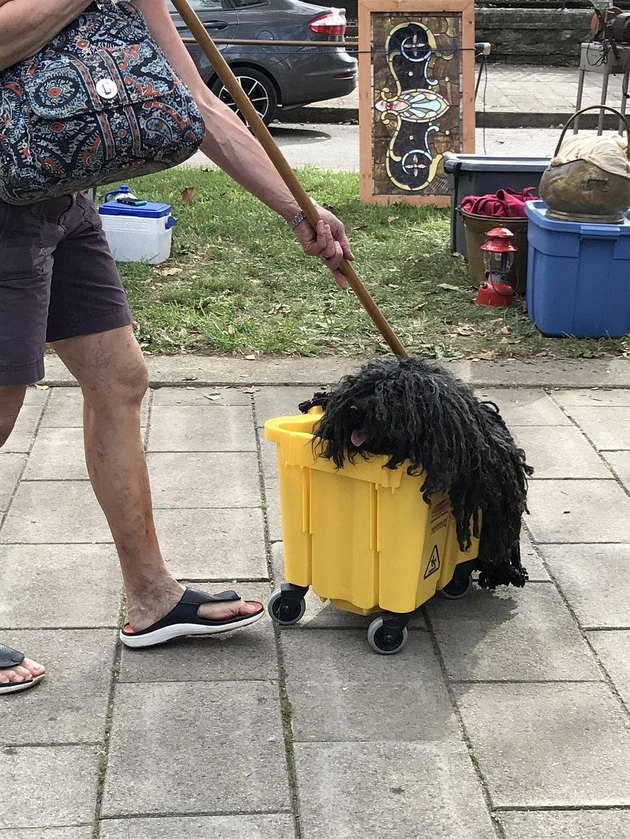 Dog cosplaying as bucket mops wins all the Halloween trophies