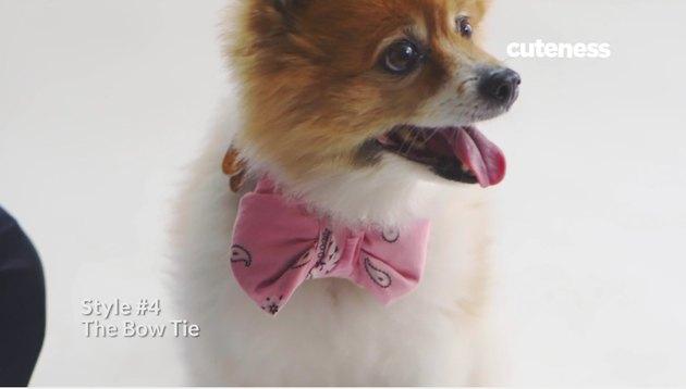 bandana on dog